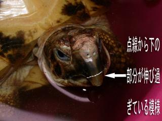 リクガメの病気