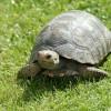 tortoiseとturtleの違い