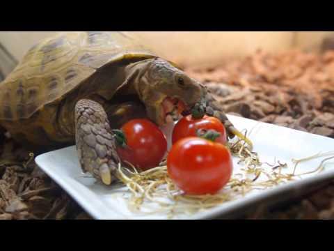 プチトマト食べれるかな?