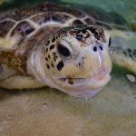淡島マリンパークでアオウミガメに出会いました!