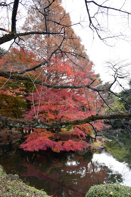 新宿御苑紅葉2016