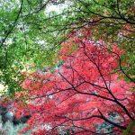 新宿御苑の紅葉2016見に行って来ました!
