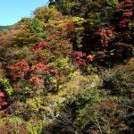 秩父のパワースポット、霊峰三峯神社と紅葉を楽しんで来ました!