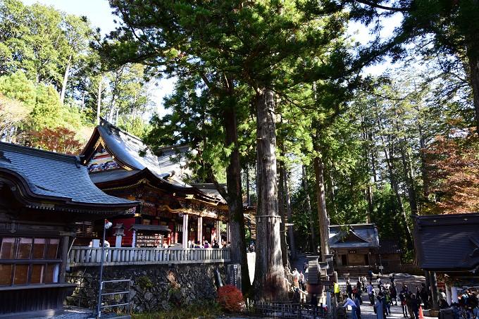 三峯神社御神木