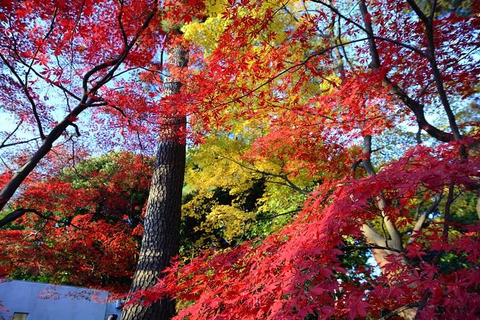 新宿御苑紅葉