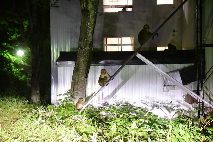 志賀高原の猿