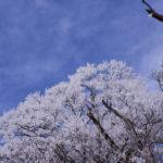 【登山部】丹沢は大山に登ってきました!