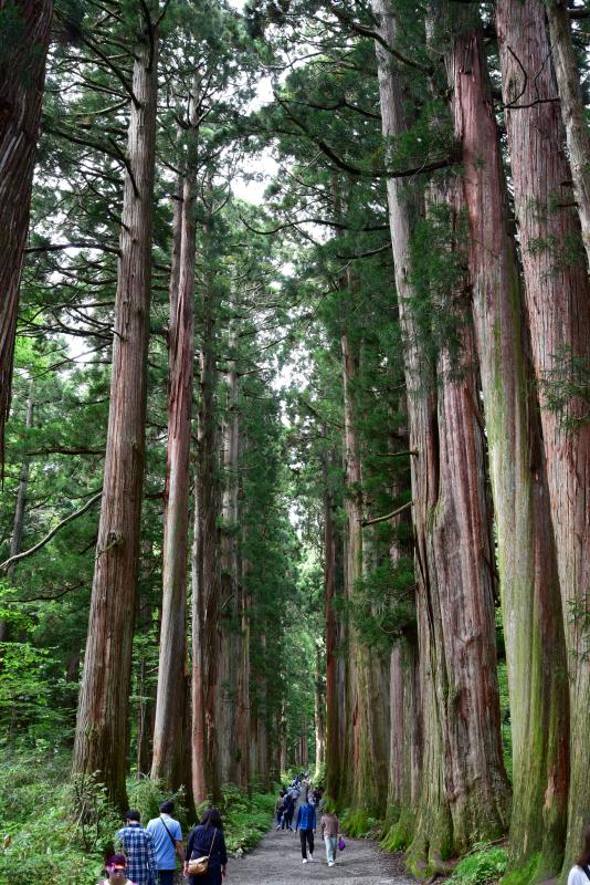 戸隠神社奥社参道杉並木